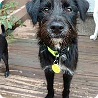 Adopt A Pet :: Benny - Oakhurst, NJ
