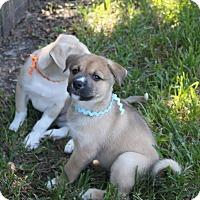 Adopt A Pet :: Gabriel - Friendswood, TX