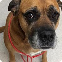 Adopt A Pet :: Winston - Spokane, WA