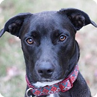 Adopt A Pet :: Gurley - Cookeville, TN