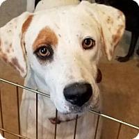 Adopt A Pet :: Shiner - Roanoke, VA