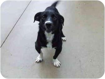 Skippy | Adopted Dog | Batavia, OH | Basset Hound/Border ...