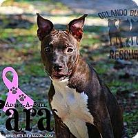 Adopt A Pet :: Fara - Orlando, FL