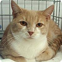 Adopt A Pet :: Baron - Germansville, PA