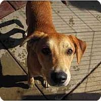 Adopt A Pet :: Cayce - Alexandria, VA
