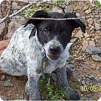 Adopt A Pet :: Brisbane - Phoenix, AZ