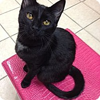 Adopt A Pet :: Tinker - Byron Center, MI