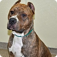 Adopt A Pet :: Guapo - Port Washington, NY