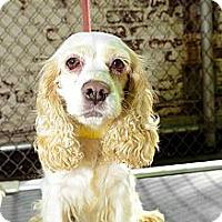 Adopt A Pet :: Myra - New York, NY