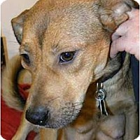 Adopt A Pet :: VIRTUE - Hagerstown, MD