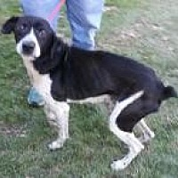 Coonhound (Unknown Type) Mix Dog for adoption in Prestonsburg, Kentucky - papaw