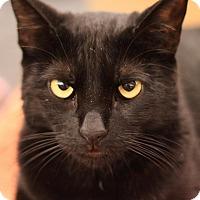 Adopt A Pet :: Brick - Sacramento, CA
