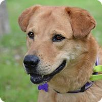 Adopt A Pet :: Sunshine - Wimberley, TX