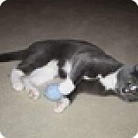 Adopt A Pet :: Yoda - Vancouver, BC
