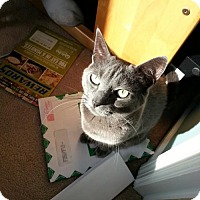Adopt A Pet :: zz 'MuShu' courtesy post - Cincinnati, OH