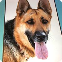 Adopt A Pet :: MARCY VON MONTAG - Los Angeles, CA