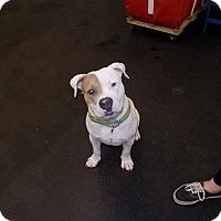 Adopt A Pet :: buster - Jupiter, FL