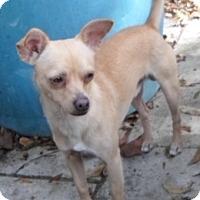 Adopt A Pet :: Jadon - Umatilla, FL