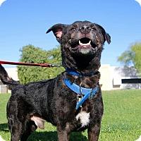 Adopt A Pet :: Breezy - Phoenix, AZ