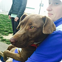 Adopt A Pet :: Rettalyn - Richmond, VA