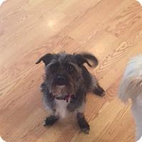Adopt A Pet :: Todo - Vacaville, CA