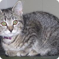 Adopt A Pet :: Sonora - Colorado Springs, CO