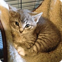 Adopt A Pet :: grayce - millville, NJ