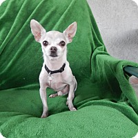 Adopt A Pet :: Danny - Studio City, CA