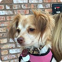 Adopt A Pet :: Camille - San Marcos, CA