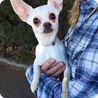 Adopt A Pet :: *Calliope Mythology - Pittsburg, CA