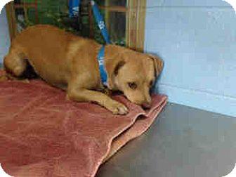 Chihuahua Mix Dog for adoption in San Bernardino, California - URGENT on 10/1 SAN BERNARDINO