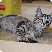Adopt A Pet :: Tawny - Carlisle, PA