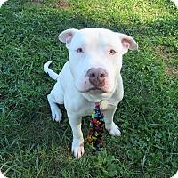 Adopt A Pet :: FROST - Lexington, NC