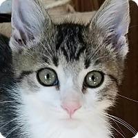 Adopt A Pet :: Chip - Colfax, IA
