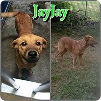 Adopt A Pet :: JayJay - Hudspeth County, TX