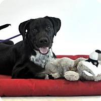 Adopt A Pet :: Conan - Goodyear, AZ