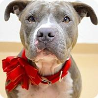 Adopt A Pet :: Maya - Dublin, CA