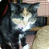 Adopt A Pet :: Millie - Bay City, MI