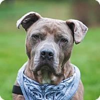 Adopt A Pet :: Gotti - Eastsound, WA