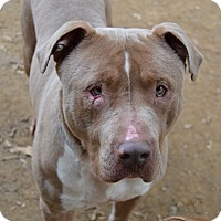 Adopt A Pet :: Hoss - Santa Barbara, CA