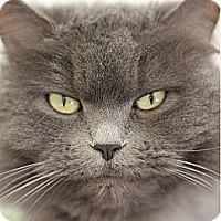 Adopt A Pet :: Schnug - El Cajon, CA