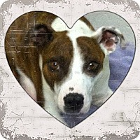 Adopt A Pet :: Missy - Yerington, NV