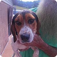 Adopt A Pet :: Cosmo - Minneapolis, MN