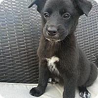 Adopt A Pet :: Lovebug - Linton, IN