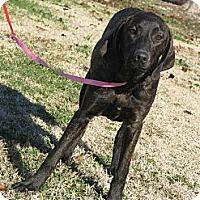Adopt A Pet :: Skeeter - Des Plaines, IL