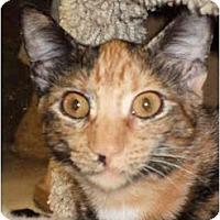 Adopt A Pet :: Confetti - Fort Lauderdale, FL