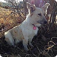 Adopt A Pet :: Aura - Saskatoon, SK