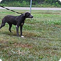 Adopt A Pet :: Moon - Linden, TN