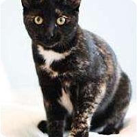 Adopt A Pet :: Pippa - Chicago, IL