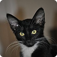 Adopt A Pet :: Sylvester - Modesto, CA